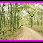 Il bosco vicino