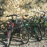 le biciclette dell'agriturismo