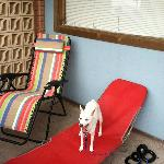 Patio area in front of my room. (My chairs and dog. lol)