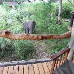 Taken from the deck of our tent - the visiting elephant