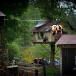 Foto de Zippin' Pig BBQ at Foxfire Mountain