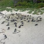 Boulders National Park in Simons Town (home of the African Penguins)