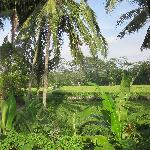 view of the rice fields at the end of the pool