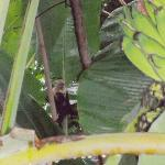 Monkeys from our room