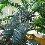 love those palms