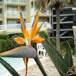 Bird of Paradise from the pool area
