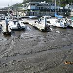 Very LOW tide!!!