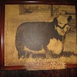 Champion Cow