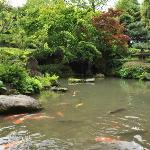 garden with koi pond