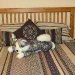 Kimchi enjoying the bed