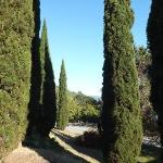 Italian Cypress remind us of the order's Tuscan roots.
