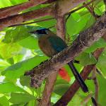 Songbirds also visit Las Cascadas