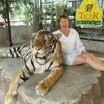 Big tiger photoshoot