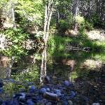 Hike through Calaveras State Park