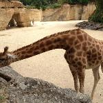 Bio Parc zoo is a must. Not just for kids!