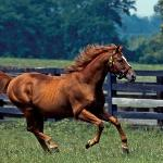 Rolling fields, thoroughbreds and beautiful horse farms