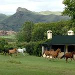 Photo of Dos Lunas Horse RIding Lodge