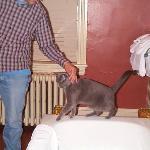 Hubby petting Inkeeper's cat