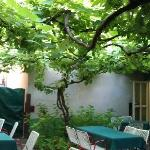 Dining area under the vine arbour in summer