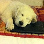 Cooper sleeps with his Ipad