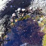 Tide Pools - Incredible Wildlife Viewing