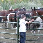 Horses onsite