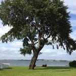 The beautiful tree outside