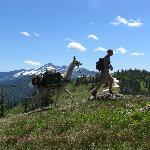 Very Scenic Alpine Trail