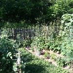 more vegetable garden