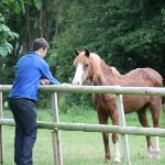 Feeding the pony