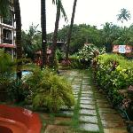 lush greens in the monsoons !