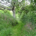 Nick's woodland path with pretty wildflowers