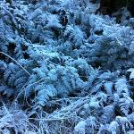 frozen foliage on our trip