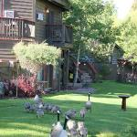 Early morning at the Inn on the Creek, Jackson Hole
