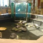 turtles in the lobby