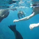 купание с морскими львами