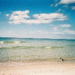 Cape San Blas Beach Florida Remote Pet Friendly Natural Wild Beach Bird