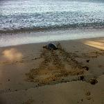 Morning Turtle at Sandy Lane