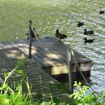la visite des canards!!!