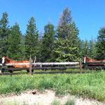 horses at the ranch