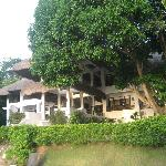 Anilao,Bambu