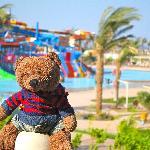 Loafie Bear at Makadi Aqua Park