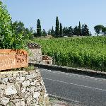 Entry with vineyard across the road