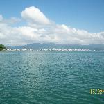 vista de bombhinias