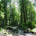 Waldreiche Umgebung