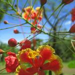 Hotel Hibiscus Garden Photo