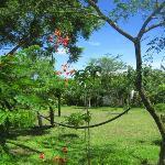 Hibiscus Garden (43995615)