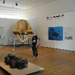 Leviathon skull discovered in the Peruvian desert
