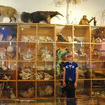 The taxidermy room