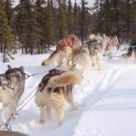 Great dog sled ride!  Can't wait to do that again.  :-)